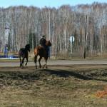 У этих коней заправка в другом месте.