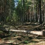 А деревья всё падали и падали...