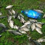 33 хвоста улова отдельно взятого автора